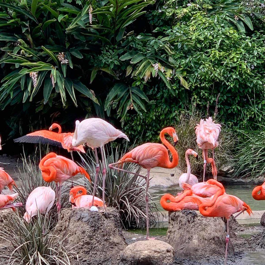 גן החיות של סן דייגו. המלצות לחופשה בסן דייגו: באיזה מקומות כדאי לטייל, איפה כדאי לישון ומה כדאי לעשות בעיר הנופש שבקליפורניה